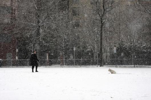 鄰居不畏風雪出門遛狗