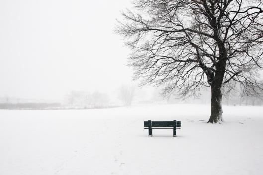 2/8下午,雪勢還未轉強前,查爾斯河畔的一塊空地已開始積雪