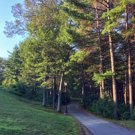 跑起來一點也不輕鬆的林中小徑 (賽後補照)