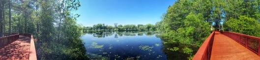 跨過Ames Pond的木板橋 (全景圖,賽後補照)
